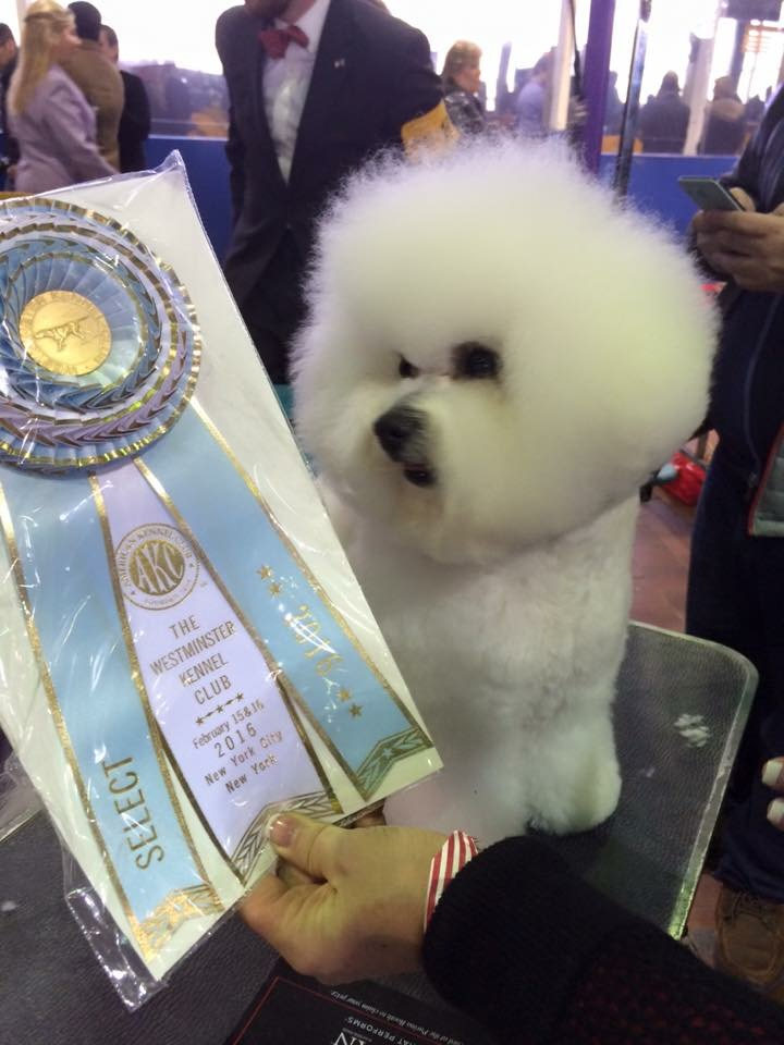 P and his Select Ribbon at 2016 WKC