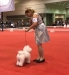 2016 Royal Canin National Dog Show