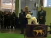 Ellen and Pharrell 2016 Westminster Kennel Club Dog Show