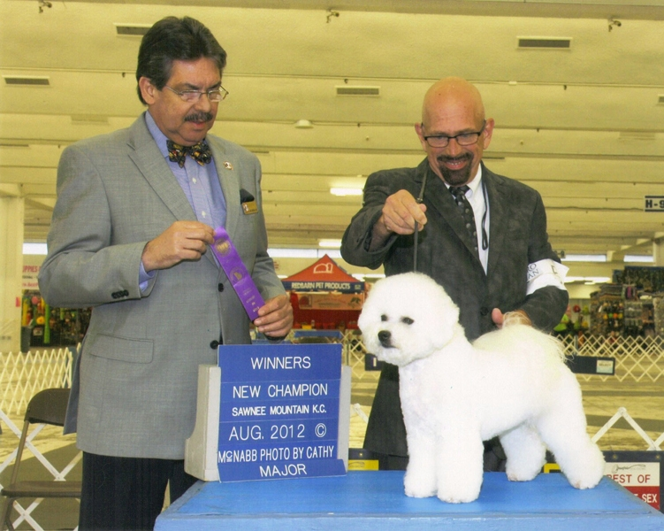 Wendan Bichons | Breeders of Top Quality Bichons for Show